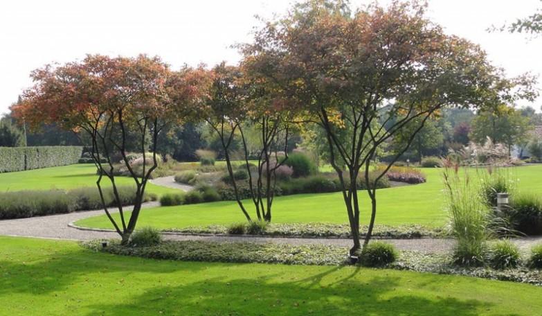 стриженые формы растений
